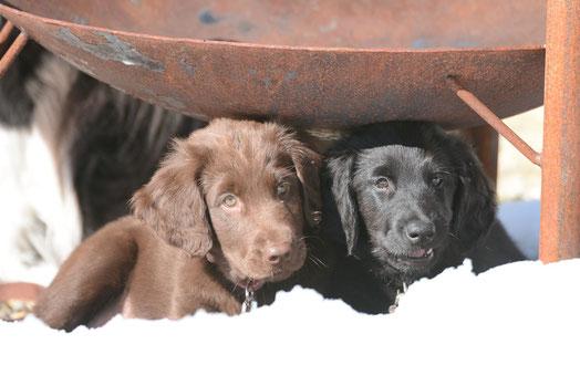 Feela & Paige im Schnee im Diemtigtal