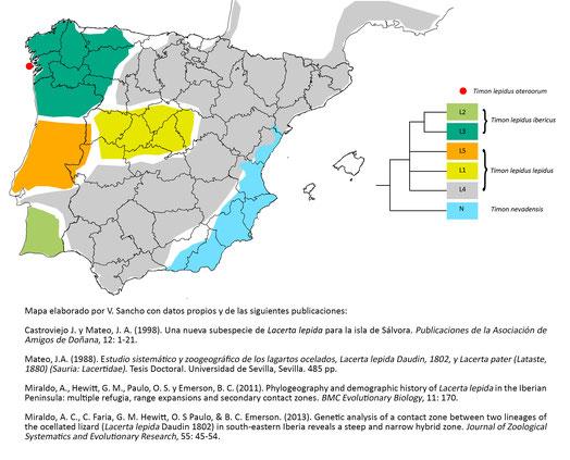 Distribución de Timon spp. en la península Ibérica y árbol filogenético simplificado. © V. Sancho 2016.