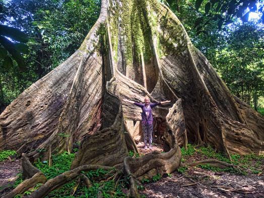 La Ceiba - der größte Baum des Dschungels