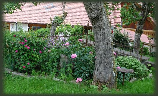Blick durch Rosen und Pfingstrosen auf den Steintisch.
