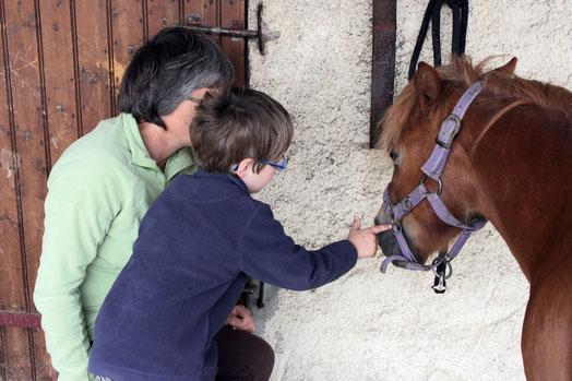 Thérapie ou psychothérapie : se sentir mieux par la relation avec le cheval