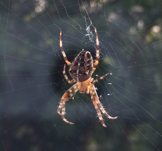 Hypnose kann helfen, die Angst vor Spinnen zu besiegen