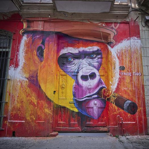 Noe Two - Havana 2020 / ©peter-voss