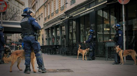 Exemple de chiens d'utilité en activité aux côtés de la police Lyonnaise