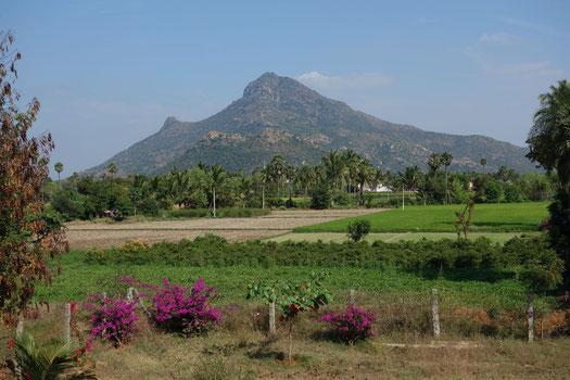 Archunachala, der heilige Berg in Tiruvannamalai im Bundesstaat Tamil Nadu, Indien (Januar 2015)