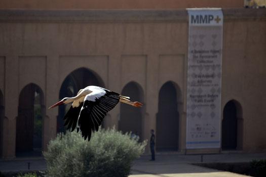 Die Störche sind heute eine Art Markenzeichen der Ruine des Palais el Badi