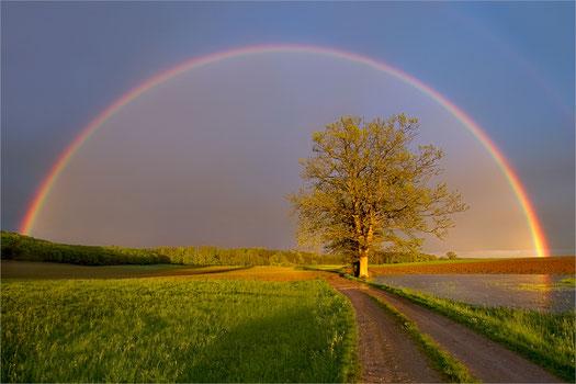 Regenbogen, Natur, fantasitsche Naturereignisse, Lebendigkeit