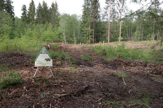 Mobile Infotafel mit Informationen über die Wichtigkeit von wassergefüllten Fahrspuren für die Gelbbauchunke. Diese Schilder können jedes Jahr an neuen Stellen im Wald aufgestellt werden und sind somit kompatibel mit der nötigen Dynamik für die Art.