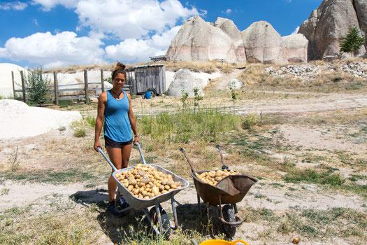 Viviane being proud about the potatoe harvest