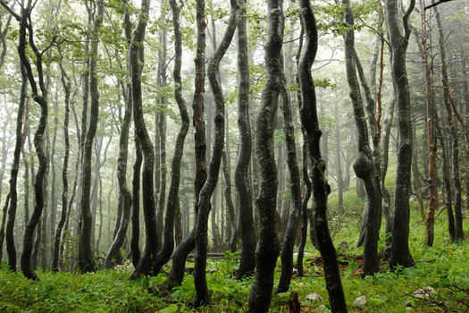 Forest hike at Northern Velebit National Park
