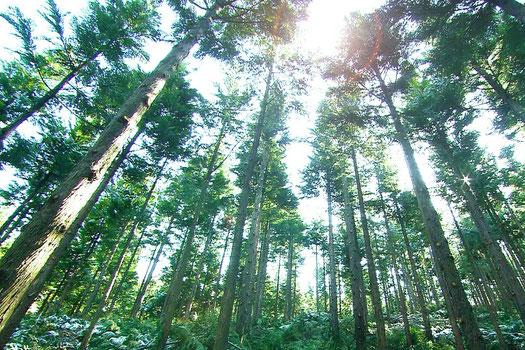 天木森(てんこもり)樹木の力