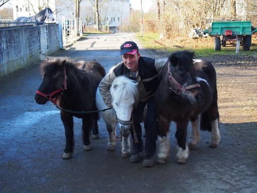 Waldemar beim täglichen Paddockgang mit den Shettys