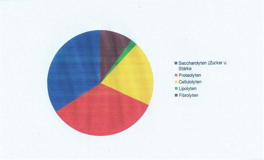 Mikrobiom Pferdedickdarm: Anteile z.N.g.