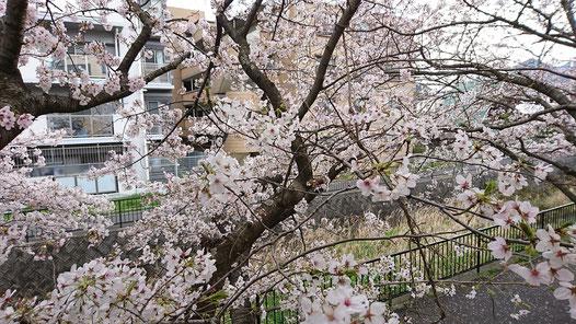 陶板浴ハイジ・桜