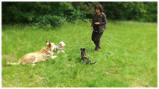 Clickern mit drei Hunden