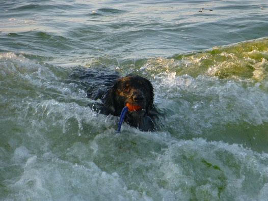 Im Wellenbad: Sommer 014 in der Bretagne (F).