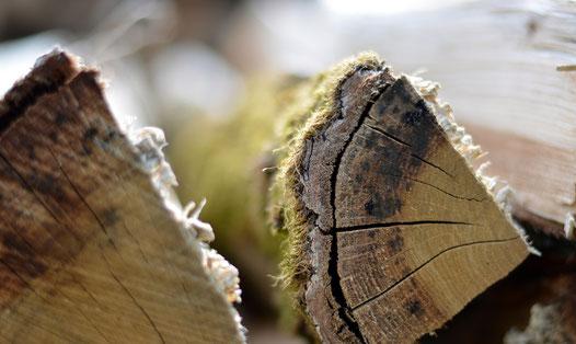 Brennholz Forstwirtschaft Schafmandl