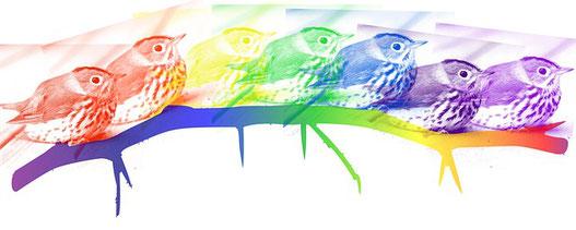 Vögel in verschiedenen Farben