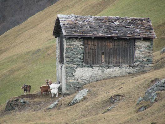 Ziegenstall bei Vals