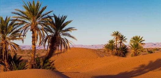 dunes et oasis au desert du Maroc