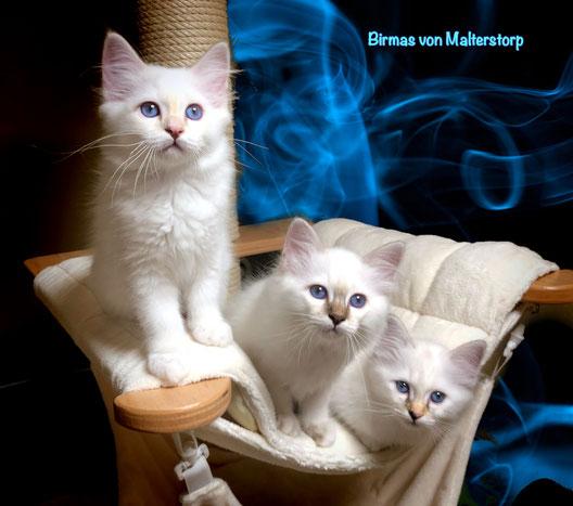 Emilia, Edgar & Elfi