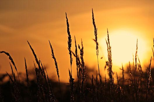 Sommerliche Hitze - Bild von S. Hermann & F. Richter auf Pixabay