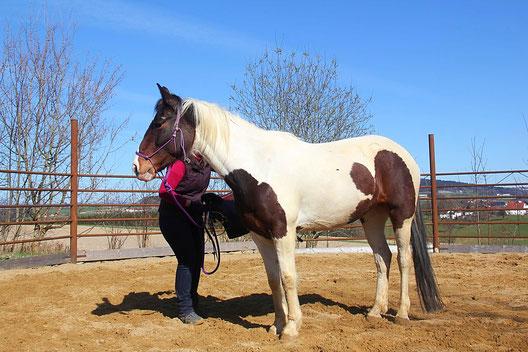 Frau sattelt Pferd