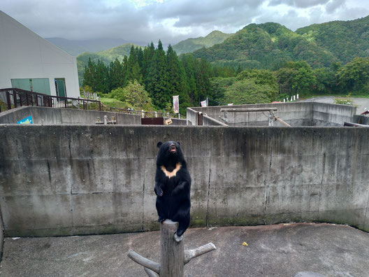 秋田県 くまくま園
