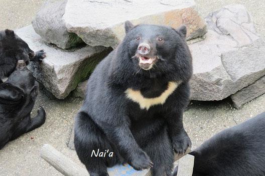 岩手県 秋田県 くまくま園 クマ牧場 ツキノワグマ ヒグマ