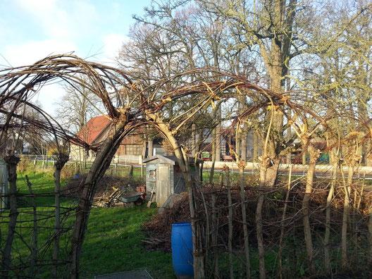 """Der Eingang zum Garten: Sehr lange 3jährige Weidentriebe wurden zu einem """"Kunstwerk"""" geflochten und zusammengebunden."""