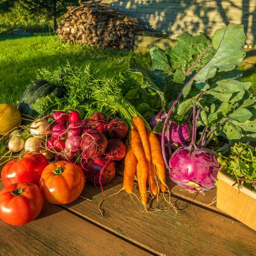 légume, carotte, tomate, radis, betterave, mesclun, chou-rave, concombre