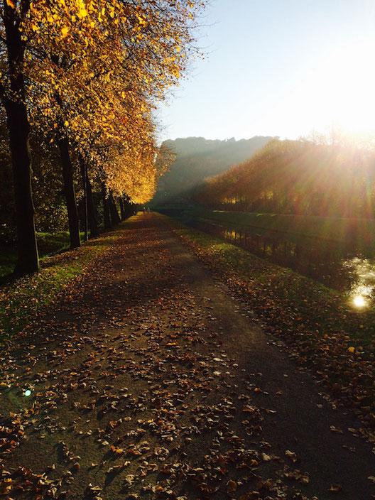 Spaziergang im Park mit einer Baumallee und bunten Blättern im Herbst