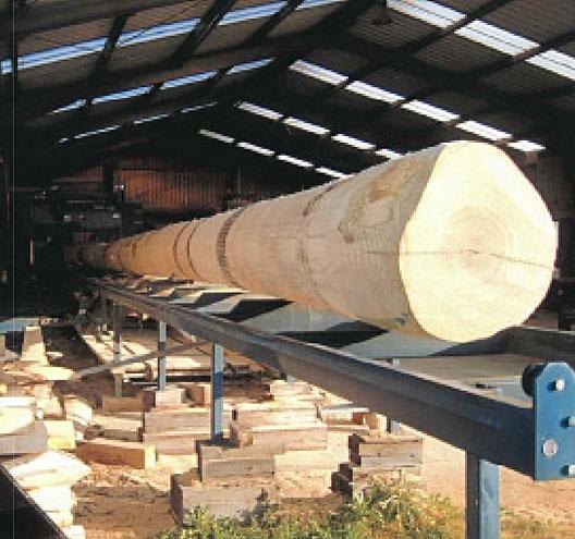 Im Sägewerk wird der gewaltige Baumstamm zu Rohlamellen geschnitten