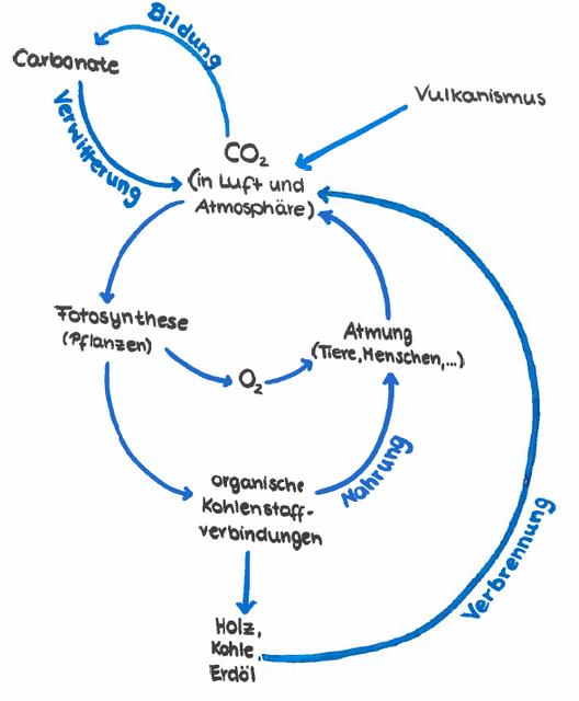 Wie Läuft Der Kohlenstoffkreislauf Ab Bio Einfach Erklärt