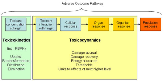 Toxicokinetic-toxicodynamic models and adverse outcome pathways