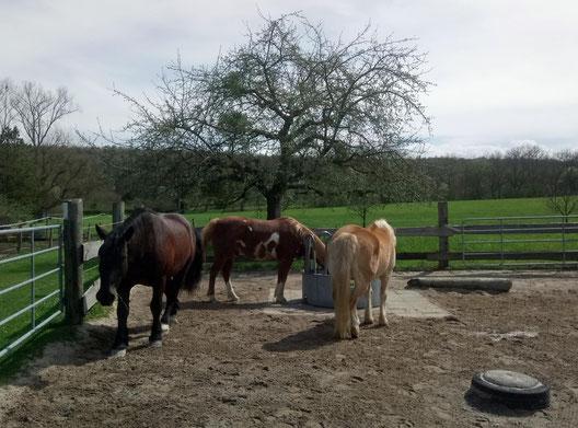 Unsere kleine Herde: Willi, Joe und Amor