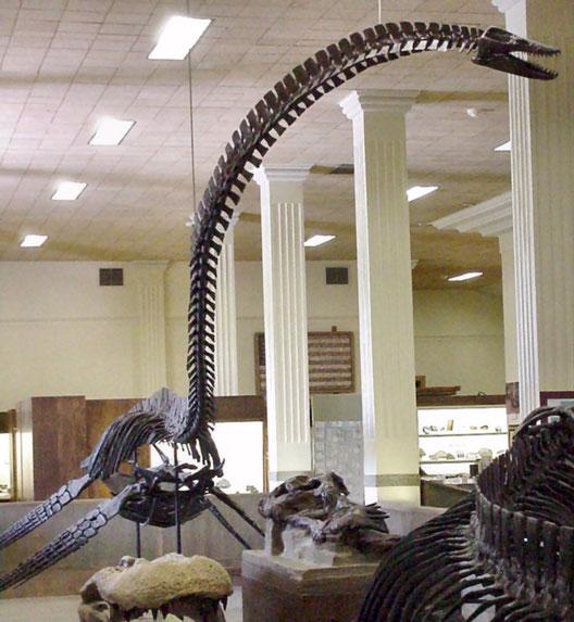 Alzadasaurus pembertoni holotype