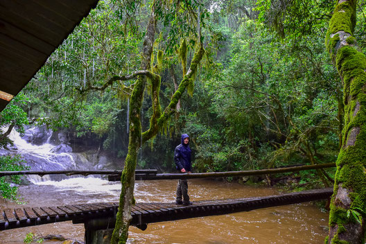 Im Regen im Urwald in Tzaneen