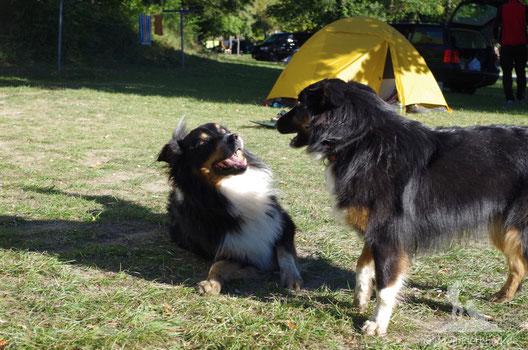 Große Hundeliebe: Ari und sein Urlaubsflirt Juno.