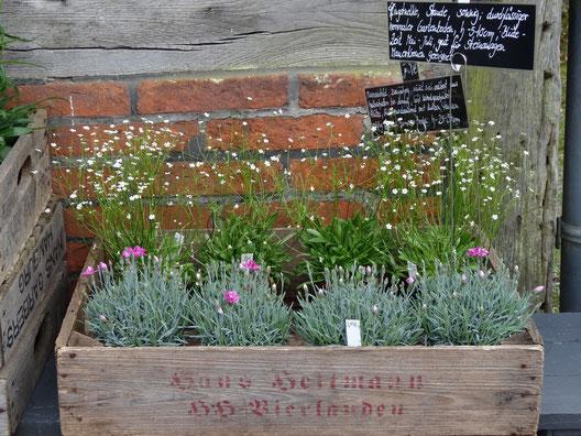 Bild: Schönes auf dem Pflanzenmarkt: Gartendekoration, Stauden, Gehölze.....alles für das Gärtnerherz
