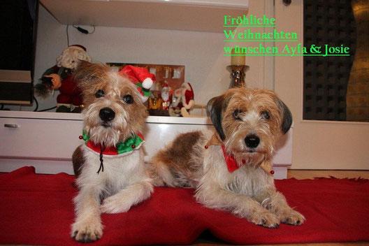 Auch unser Rudel wünscht allen frohe Weihnachten!