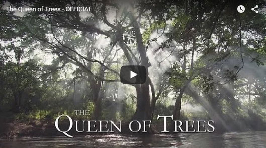 The Queen of Trees (La regina degli alberi)