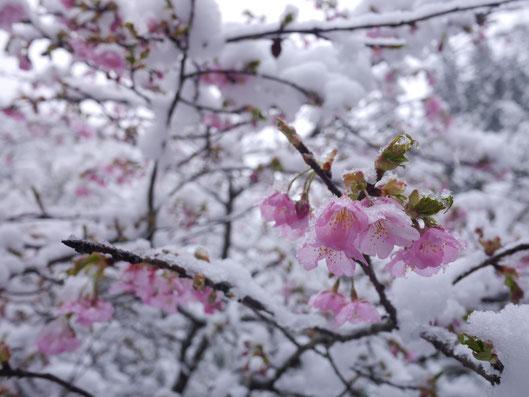 2月10日 雲取山山頂~三条ダルミ間