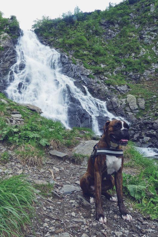 chien cascade bigousteppes roumanie