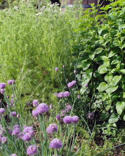 Plantas aromáticas, semilleros y hortalizas en Tenerife
