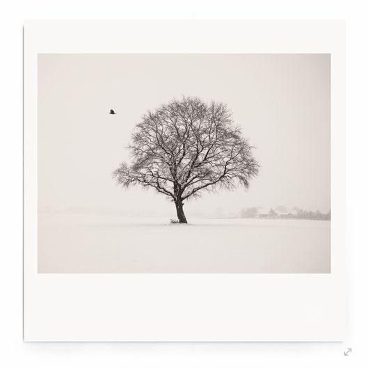 """""""Silence At The Lake II"""" Fine Art Fotografie. Minimalistische Landschaft am See in schwarz-weiß."""