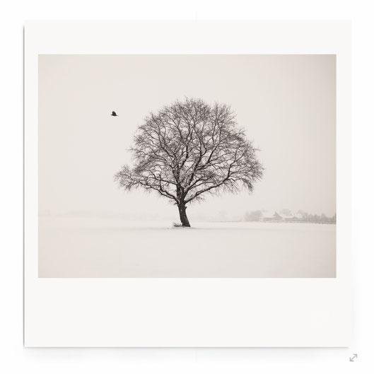 """Snowy Day In Winter"" Fine Art Fotografie. Minimalistische Landschaftmit Baum in schwarz-weiß."
