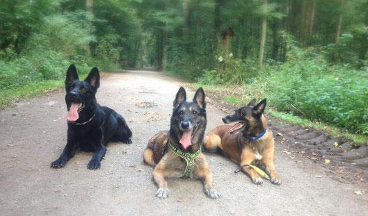 Wega (3), Rani (14) und Bazou (11) im Stadtwald 2017