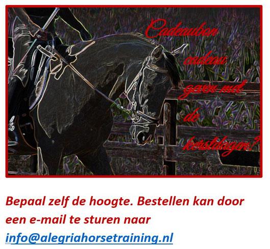 cadeaubon paardrijden