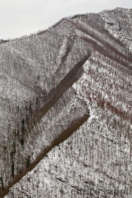 Profili di crinaletti imbiancati fanno assumere alla foresta un fascino unico.